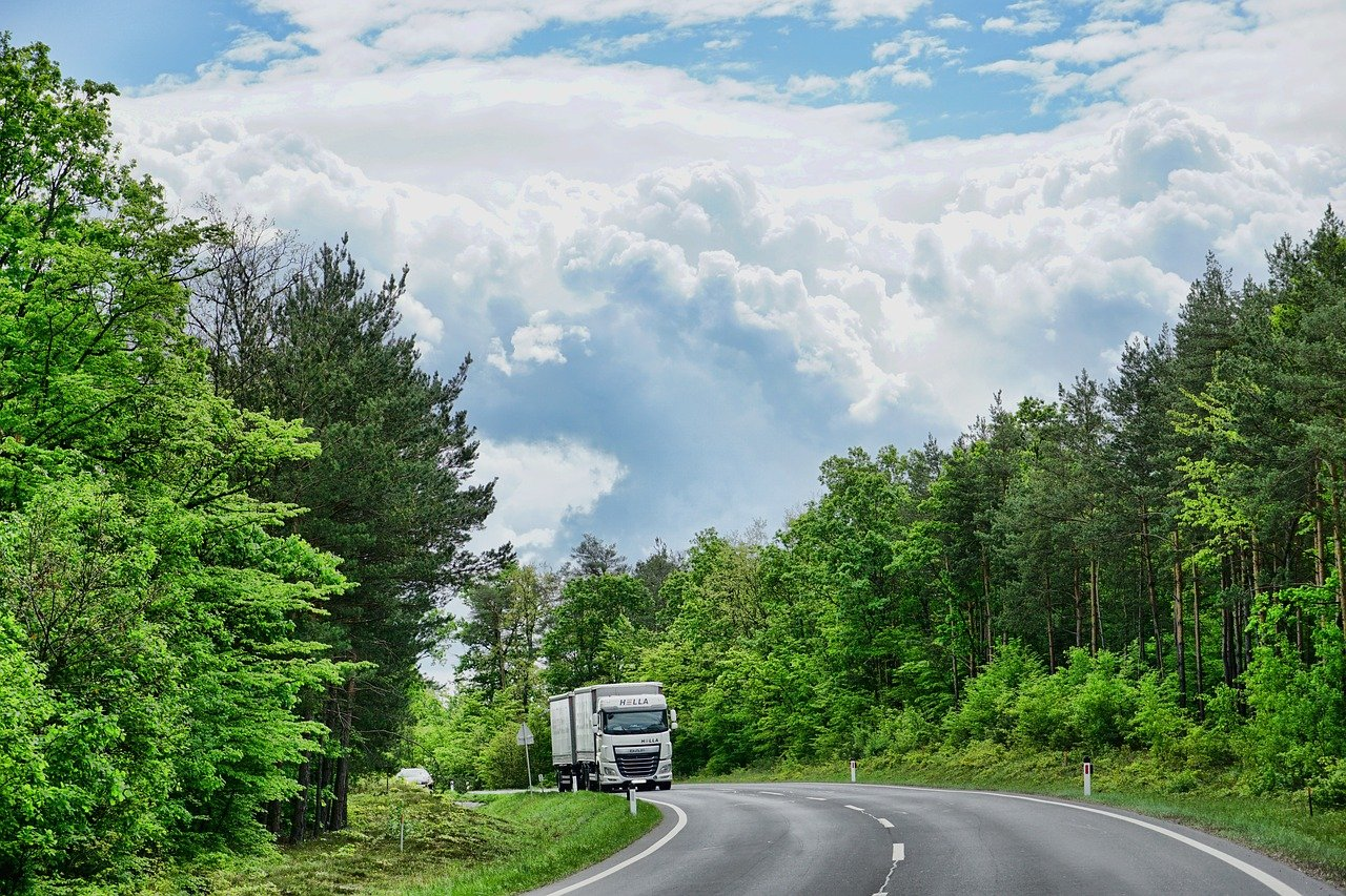 nature, road, tree
